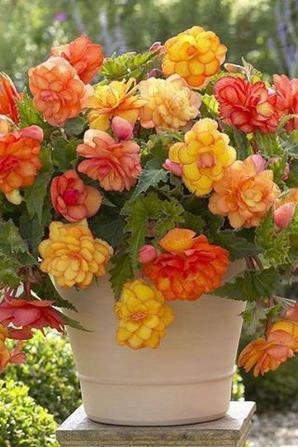 Les couleurs de la nature-----ألوان من الطبيعة