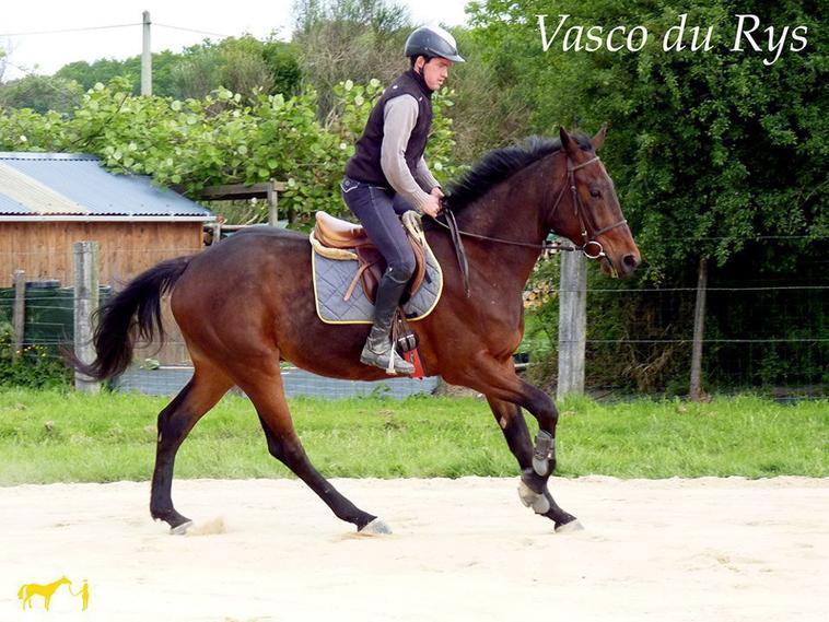Vasco Du Rys