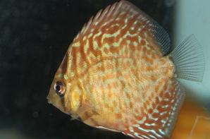 EVOLUTION DISCUS AOUT