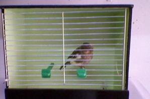 norwich chiks 2012