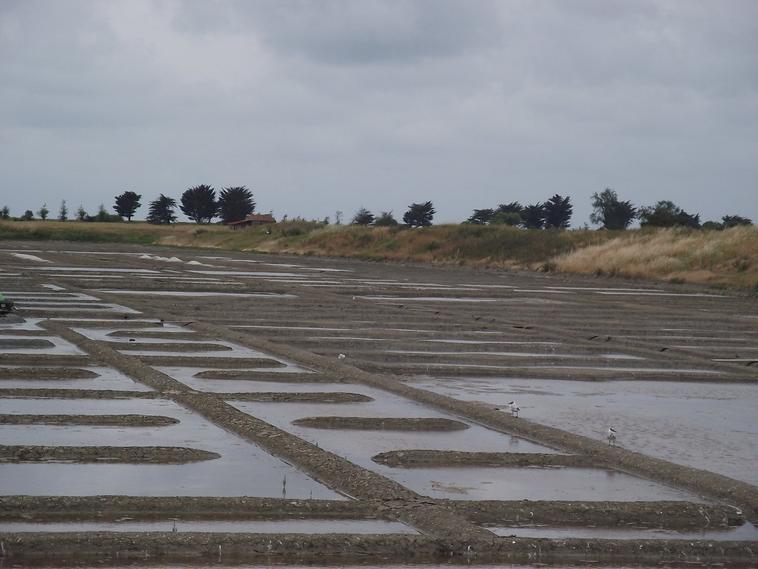 Salines dans marais bretons