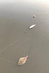 Surf à marée basse digue du Braek  (29-06-19)
