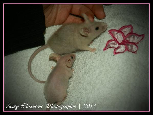 Séance photo des souris (2)