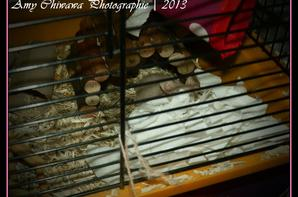 Mes souris font leurs nids