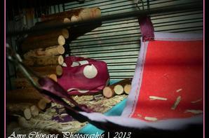 Création d'un nouveau dodo pour les souris