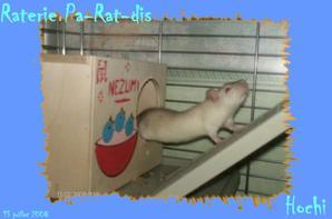 R.I.P. Hochi (2)