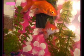 R.I.P. Mes poissons