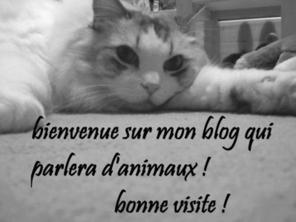 Bienvenue dans mon Blog !!!