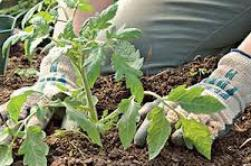 Herb Gardening In Pots & Terrace Gardening In India