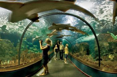 Les aquariums géants