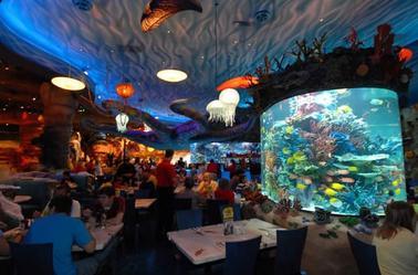 Rex Café de Disney World Orlando