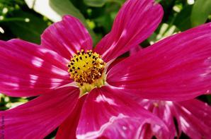 La plus belle de toute les fleurs est la fleur de la liberté ~ jean Fischart