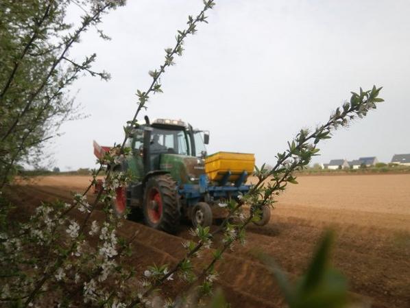 Plantation de pomme de terre 2015