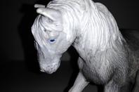 Winter Glow du poney pie