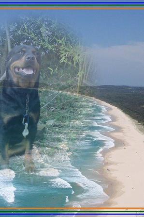 (l)Ma chienne(l)