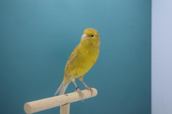 Brun pastel jaune intensif
