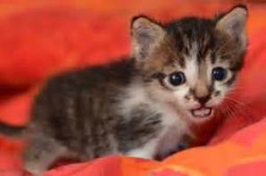 petit chaton trop mignon