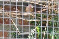 quelques oiseaux de ma volière