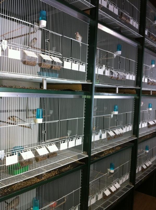 Cages d'élevage