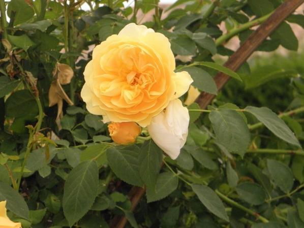 les jolies fleurs du jardin