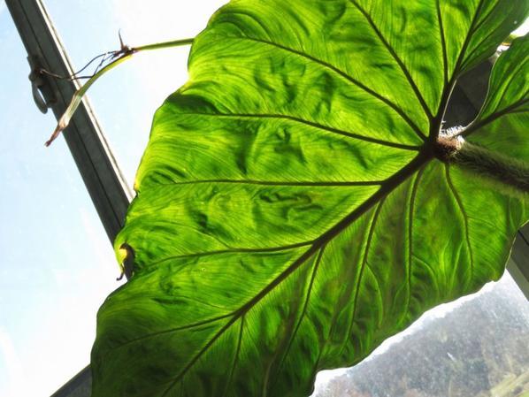Plantes 01