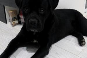 Magnifique nounours de 54kg prénomé Jasper.