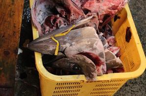 Le Marché aux poissons de Tsukiji (7)