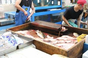 Le Marché aux poissons de Tsukiji (8)