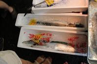 Le Marché aux poissons de Tsukiji (10)