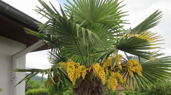 palmier en fleurs patch passion. Black Bedroom Furniture Sets. Home Design Ideas