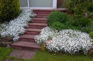 Quelques fleurs de mon jardin !