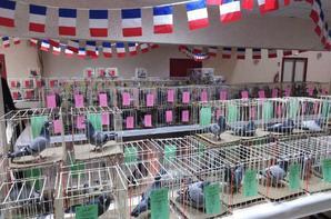 Exposition de l'Entente de l'Artois 2019, Merci à tous d'avoir participé, environ 300 pigeons étaient présents...