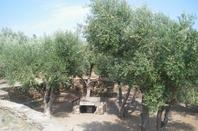 La nature rien de plus beau on a des petits paradis comme Collioure !!