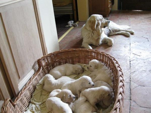 Côté bébés...