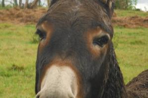 Nounours et des ânes.