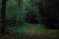 En forêt avec Dune