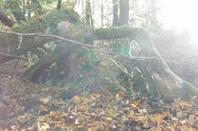 la forêt en fête !