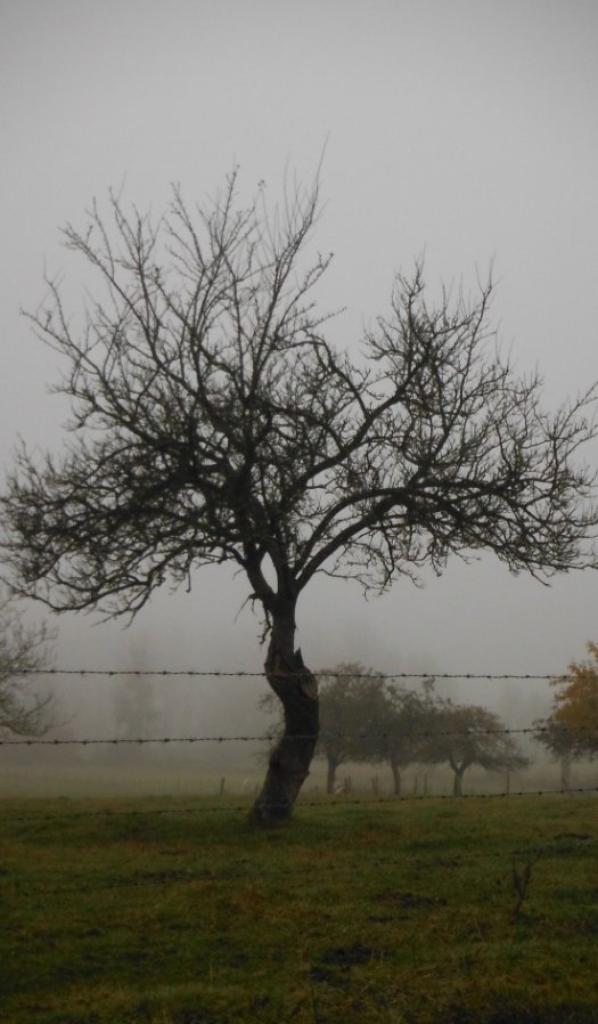 La brume, depuis ce matin !