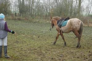 Visite chez ce poney