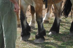 Avec un poney, un cheval.