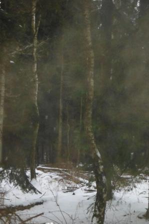 Petite neige en musique...