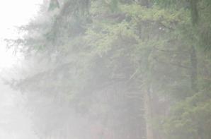 Journée de soleil, lendemain de brume...
