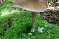 Quelques champignons...