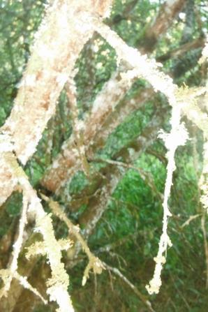 suite de la visite forestière en Argonne