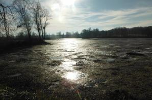 Petite vue d'un instant sur l'étang...