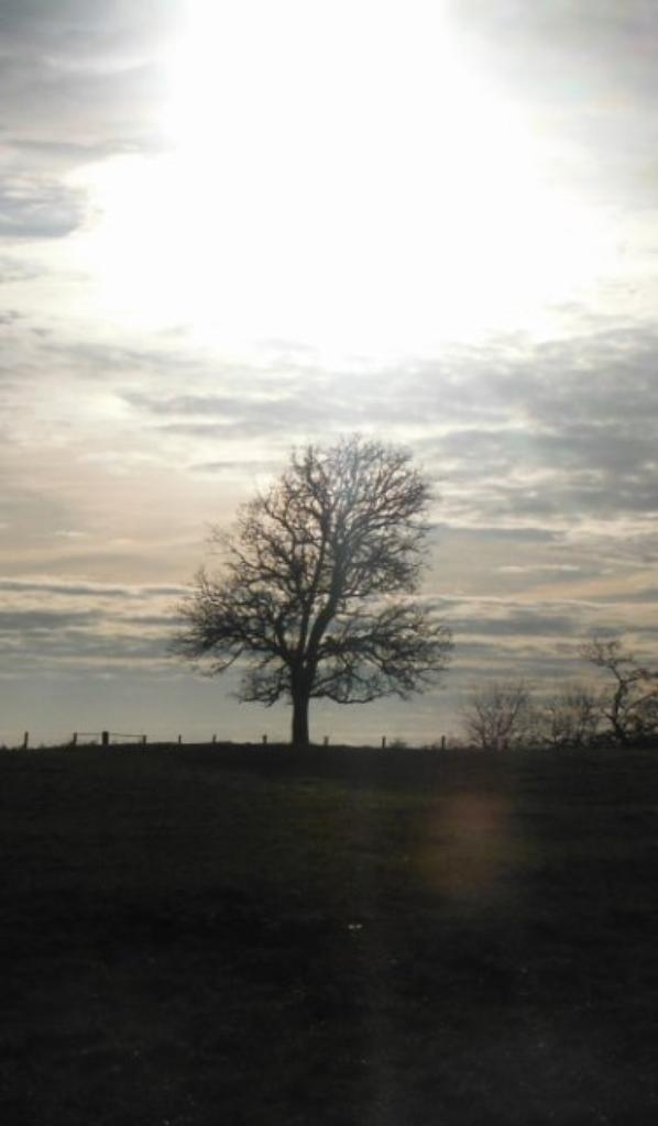 Jour de janvier....En Argonne.