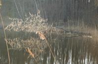 14 Mars 2012 en Argonne