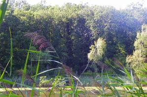 Ciel et nature en Argonne