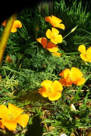 fleurs et soleil.