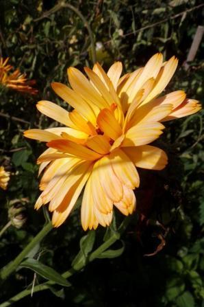 Fleurs d'octobre.